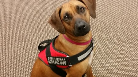 Le chien qui détecte les enfants angoissés… à l'odeur