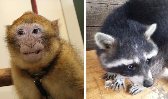 Deux animaux sauvages pris en charge par la Fondation 30 Millions d'Amis