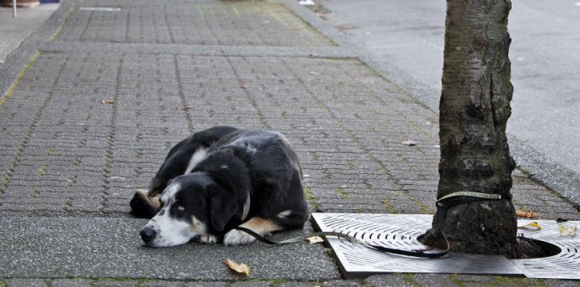 Quelles sanctions en cas de maltraitrance animale ?