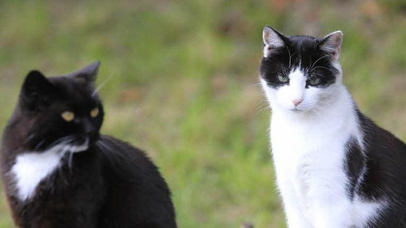 Suisse : une pétition pour interdire la consommation de viande de chiens et chats