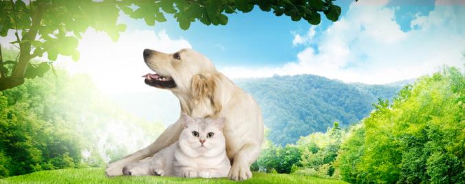 Toussaint : rendre hommage à son animal disparu
