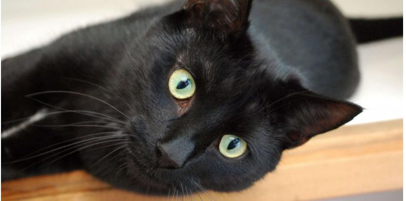 Un traitement contre le cancer caché dans les excréments du chat ?