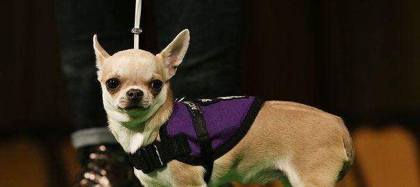 Quel budget vétérinaire à l'année pour mon chien ?