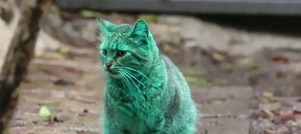 Un mystérieux chat au pelage vert se promène en Bulgarie