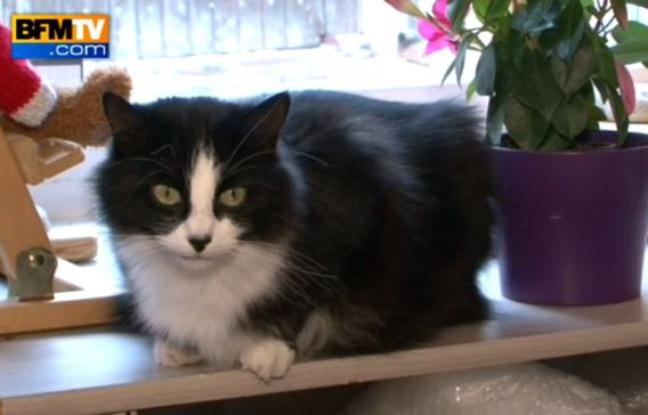 Un chat parcourt 1.200 km à travers la France pour retrouver sa maîtresse