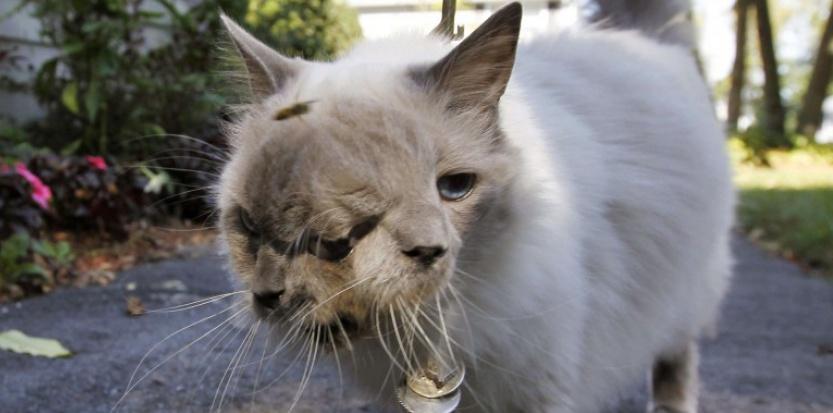 Le plus vieux chat à double tête est mort