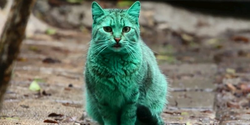 Le mystère du chat vert est résolu
