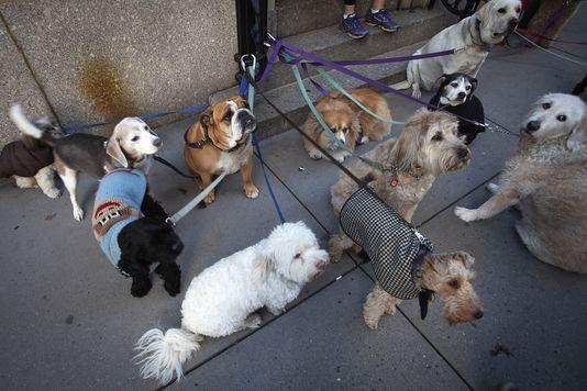 New York sauve la peau des chiens