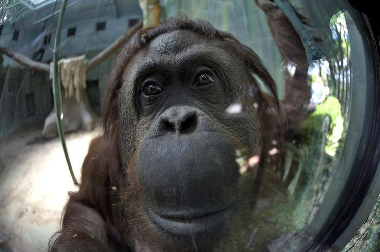 «Il faut réviser notre façon de traiter les animaux»