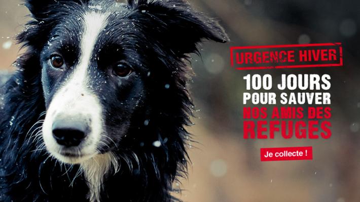 30 Millions d'amis lance une collecte pour les animaux abandonnés