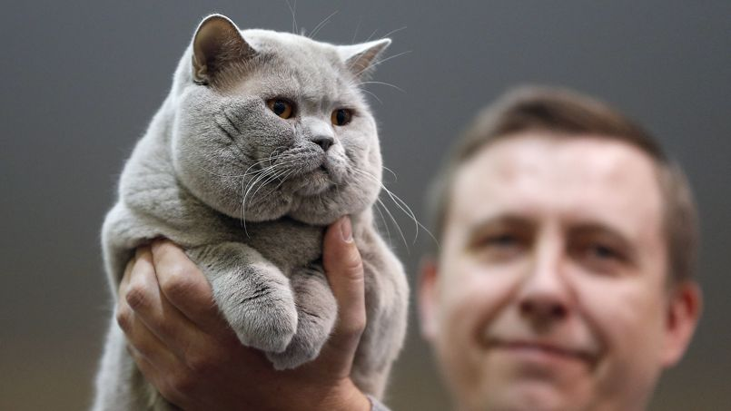 En Russie, les huissiers saisissent aussi...les chats