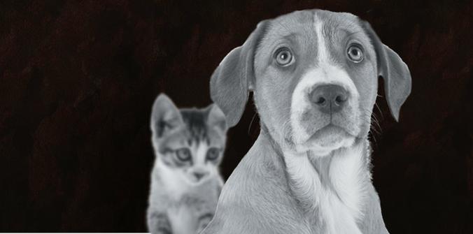 Enquête 30 Millions d'Amis : vous êtes 40000 à avoir dit non à la souffrance animale