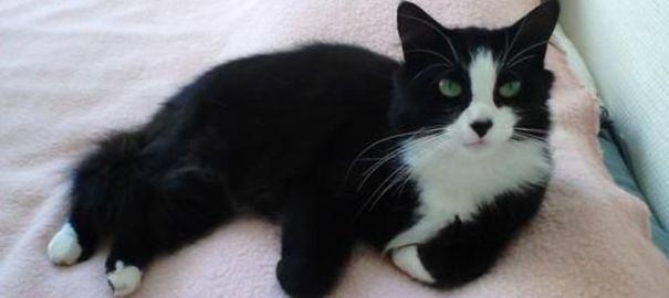 Quels vaccins obligatoires pour votre chat ?