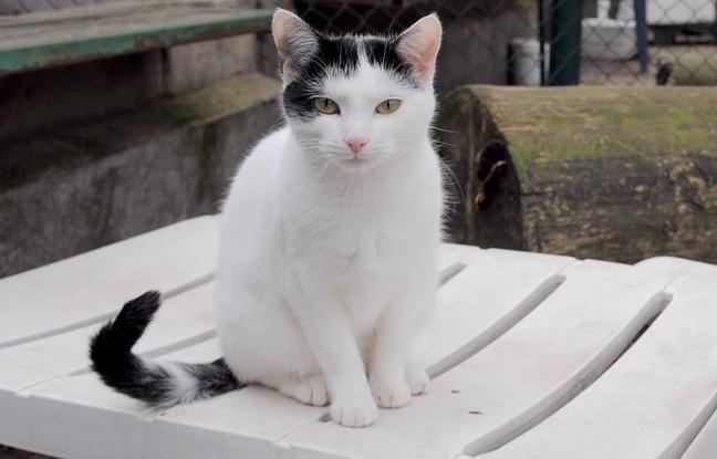 Angleterre: Un chat vit depuis quatre ans dans un supermarché et devient une célébrité