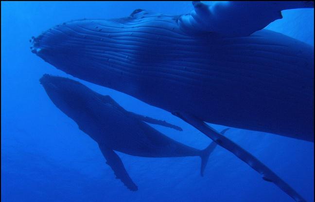 Les animaux marins deviennent plus gros au fil de l'évolution