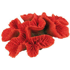 Bouton de corail Trixie