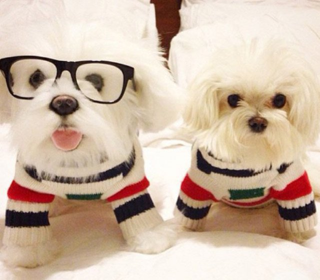 Cuddle Clones : offrez-vous la réplique de votre animal de compagnie !