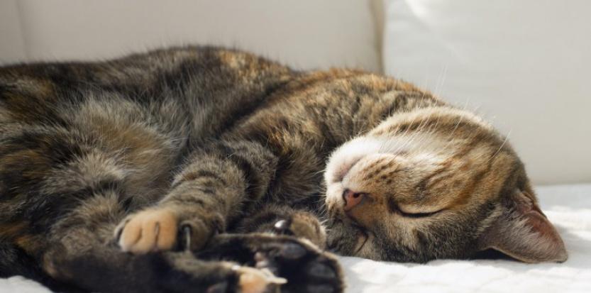 Dégriffage du chat : certains pays l'autorisent encore