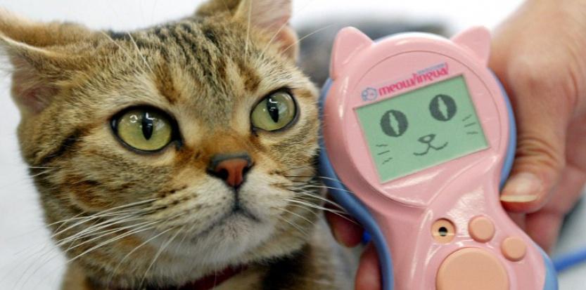Un gadget pour discuter avec son chat, ça vous tente ?