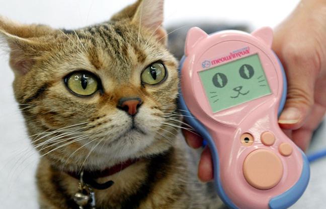 Un traducteur de miaous pour parler avec son chat