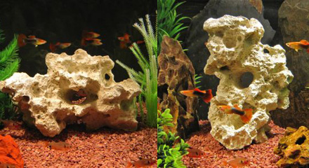Roche Zanzibar pour aquarium