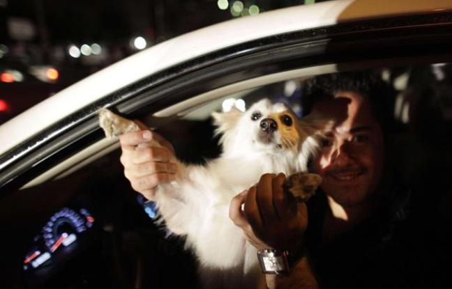 Téhéran: Les chiens errants bientôt vaccinés et équipés de GPS