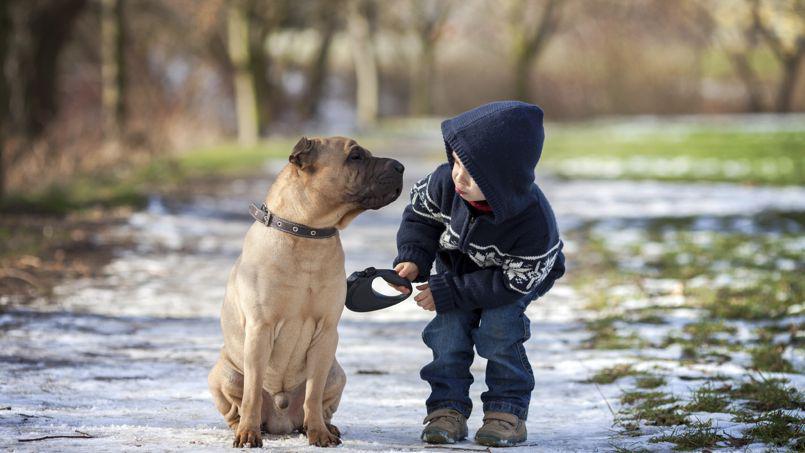 Animaux domestiques et enfants : à chacun son traitement contre les poux