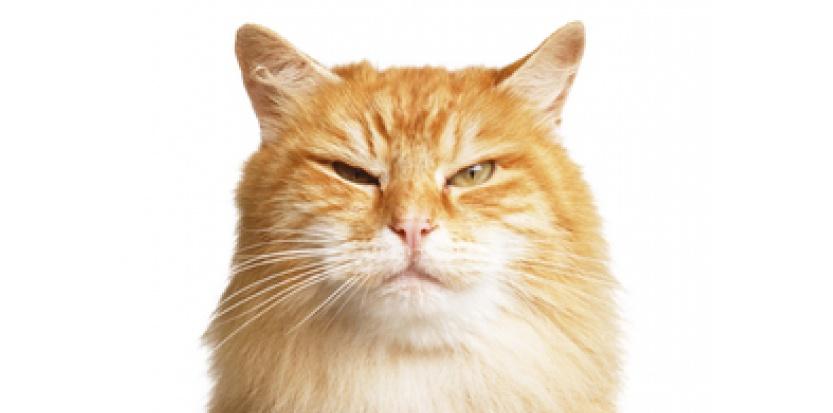 Comment faire maigrir un chat (sans le rendre fou) ?