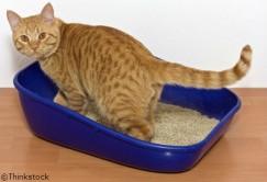 Mon chat souffre-t-il d'insuffisance rénale aigüe?