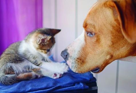Chiens et chats, si semblables et si différents…