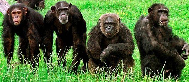 """Chez les animaux, """"la hiérarchie permet de vivre ensemble"""""""