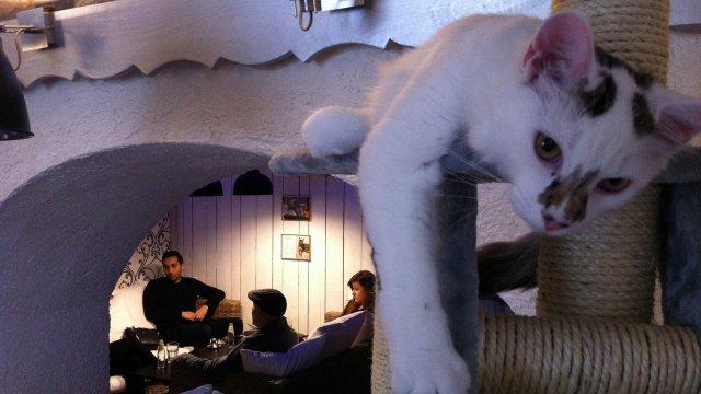 Un bar à chats à Besançon