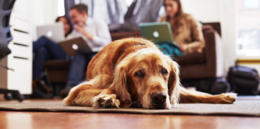 Quand un chien s'ennuie-t-il ?
