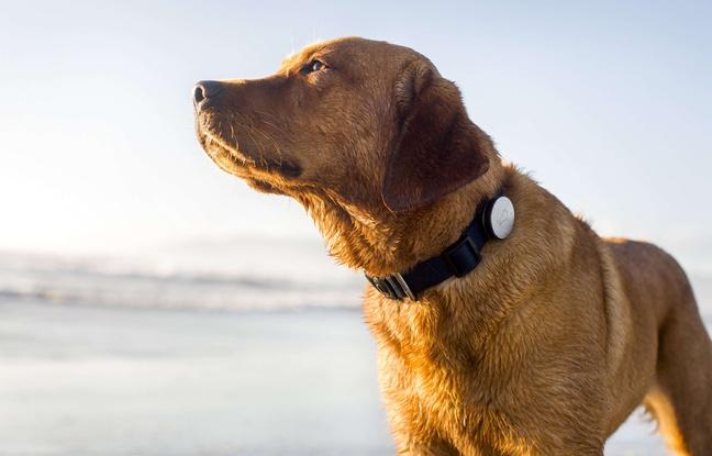 L'hormone Ocytocine serait à l'origine de l'amitié homme-chien