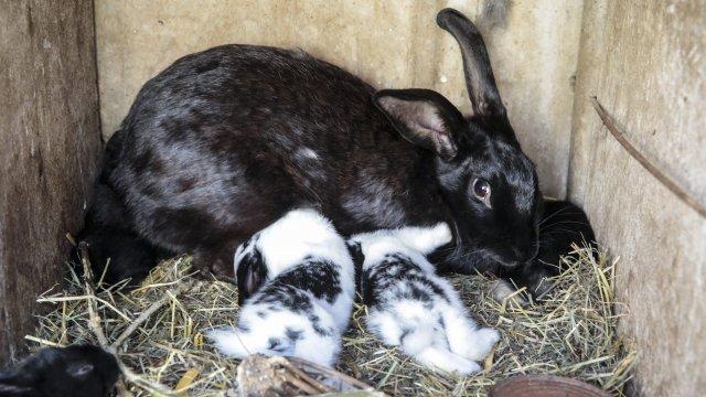 Le lapin, troisième animal de compagnie en France
