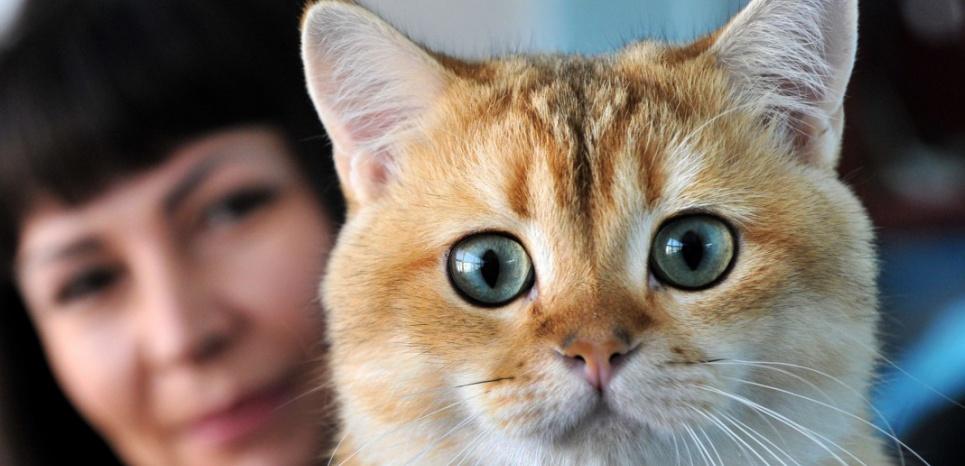 Aspirine, somnifère ou anti-inflammatoire : des médicaments dangereux pour les chats