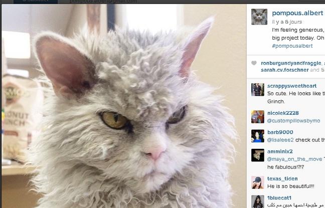 Pompous Albert, le chat qui défrise Albert Einstein