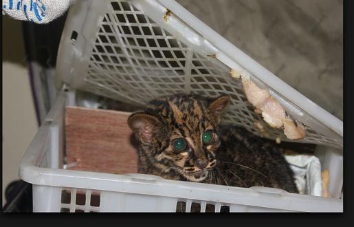 Russie: Une femme arrêtée avec 108 animaux exotiques dans sa valise