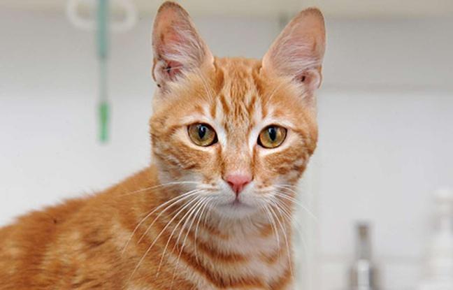 Sinbad, le chat qui a survécu à un voyage de 16 jours dans un conteneur