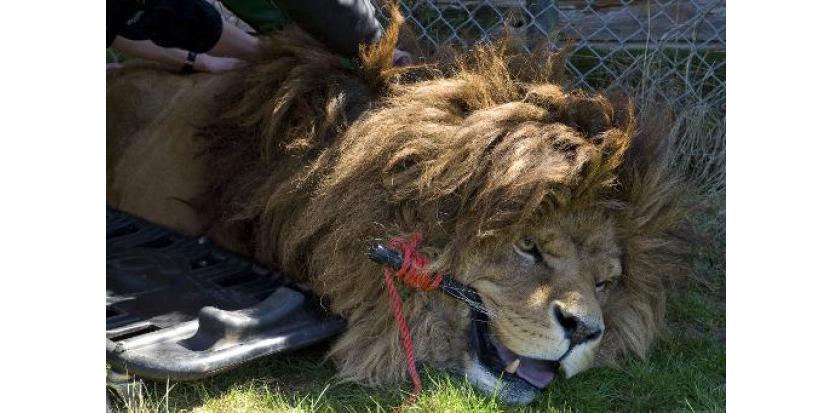 Opération sauvetage pour les animaux en péril d'un zoo du Puy-de-Dôme