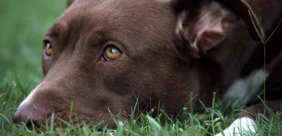 Sous leurs airs coupables, les chiens ont bonne conscience