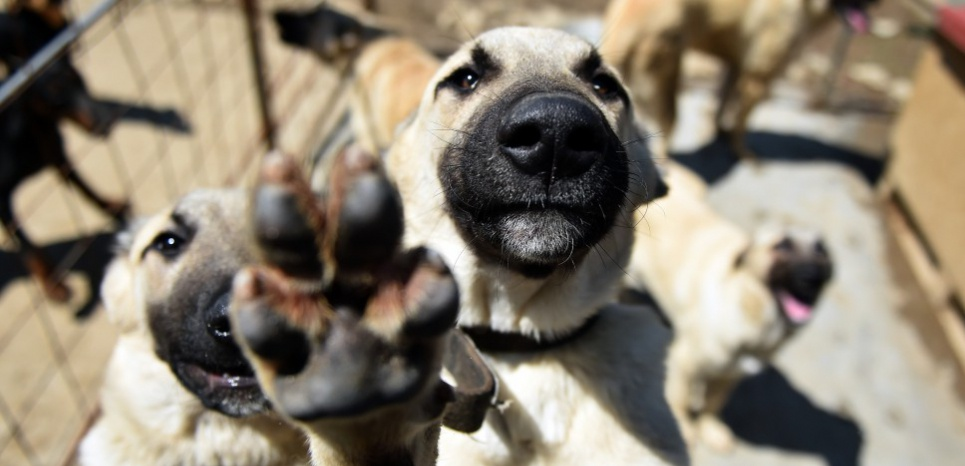ETATS-UNIS. Une application pour sauver les animaux de refuge