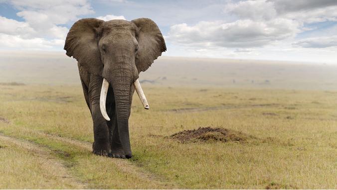 60% des animaux herbivores sont en voie d'extinction