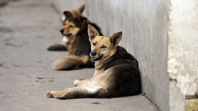 La Fondation va secourir les animaux du Népal
