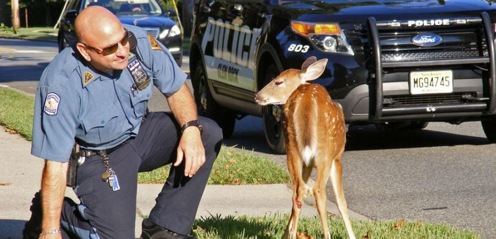 En Norvège, les animaux ont leur propre police