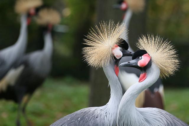 Nourrir les oiseaux sauvages favorise... les pigeons