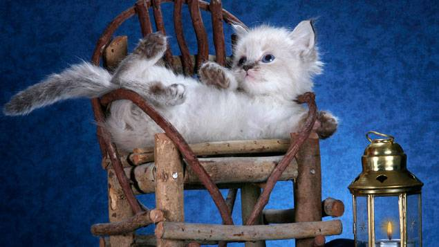 Pourquoi les chats n'obéissent-ils pas ?
