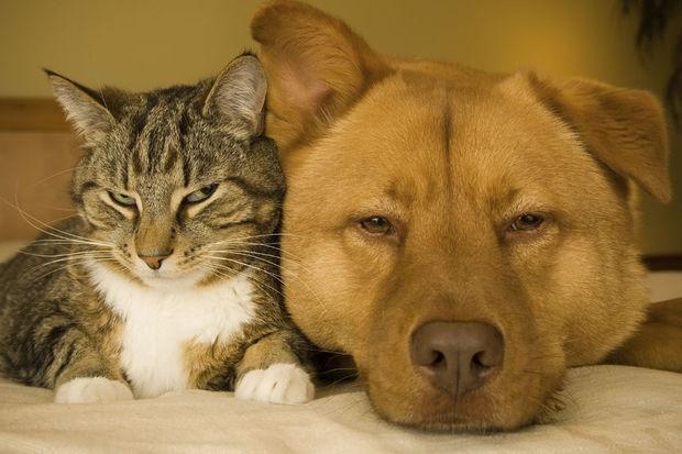 Peut-on soigner son animal de compagnie avec de la marijuana ?