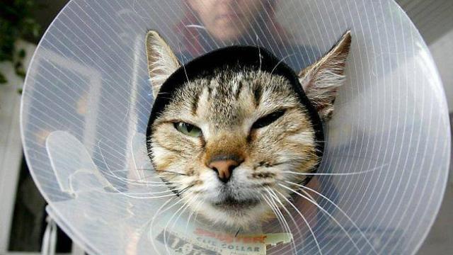 Animaux. Bien soigner les bobos de son chat