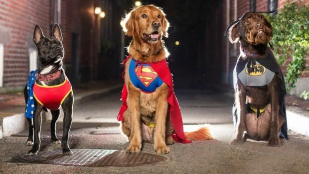 Tindog, l'appli pour trouver l'amour grâce à son chien